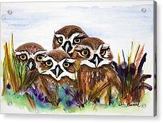 Burrowing Owls Acrylic Print by Dale Bernard