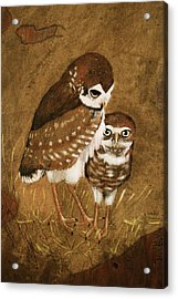 Burrowing Owls Acrylic Print by Richard Hinger