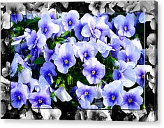 Burst Of Blue - B Acrylic Print by Robert Clayton