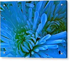 Burst Of Blue Acrylic Print