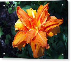 Acrylic Print featuring the photograph Burst Of Orange In The Garden by Deborah Fay