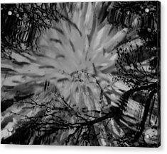Bursting Acrylic Print by Lori Bourgault