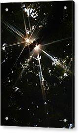 Bursting Through Trees Acrylic Print by Donna Blackhall
