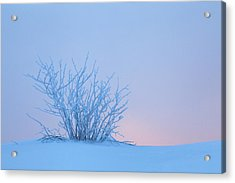 Bush In Snow In Morning Vosges France Acrylic Print by Heike Odermatt