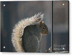 Acrylic Print featuring the photograph Bushy Tail by Mark McReynolds