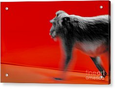 Acrylic Print featuring the photograph Business by Julian Cook