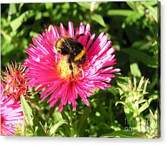 Busy Bee Acrylic Print by Bev Conover