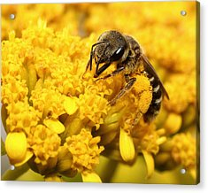 Acrylic Print featuring the photograph Busy Bee by Dawn Currie