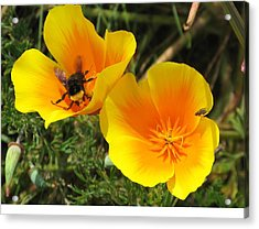 Busy Bee Acrylic Print by Jill Bell
