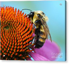 Busy Bee Acrylic Print by Judy Wolinsky