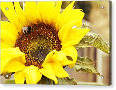 Busy Bee Acrylic Print by Les Cunliffe