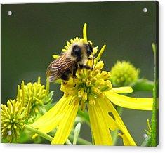 Busy Bee Acrylic Print by Lynn Berney