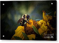 Busy Bee Oil Acrylic Print by Cris Hayes