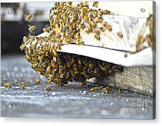 Acrylic Print featuring the painting Busy Bees by Laura Forde