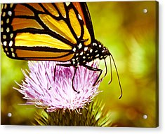 Acrylic Print featuring the photograph Busy Butterfly by Cheryl Baxter