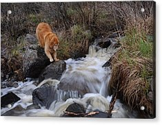 But Mom I Might Get My Feet Wet Acrylic Print by Sandra Updyke