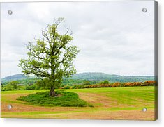 But Only God Can Make A Tree Acrylic Print by Semmick Photo