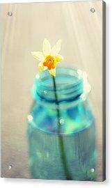 Buttercup Photography - Flower In A Mason Jar - Daffodil Photography - Aqua Blue Yellow Wall Art  Acrylic Print by Amy Tyler