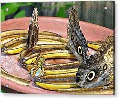 Butterflies And Bananas Acrylic Print