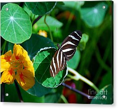 Butterflies Are Free Acrylic Print by Mel Steinhauer