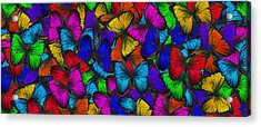 Acrylic Print featuring the photograph Butterflies In Flight Panorama by Kyle Hanson