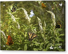 Butterflies In Golden Garden Acrylic Print by Belinda Greb