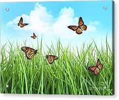 Butterflies In Tall Wet Grass  Acrylic Print by Sandra Cunningham