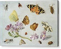 Butterflies Acrylic Print by Jan Van Kessel