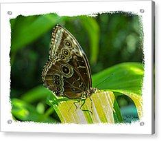 Butterflies Acrylic Print by Joe Oliver