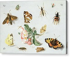 Butterflies Moths And Other Insects With A Sprig Of Apple Blossom Acrylic Print by Jan Van Kessel