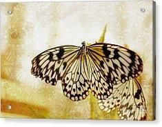 Butterflies On Lace Acrylic Print by Floyd Menezes