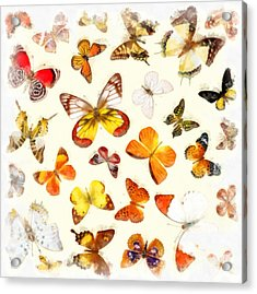 Butterflies Square Acrylic Print by Edward Fielding