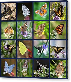 Butterflies Squares Collage Acrylic Print by Carol Groenen