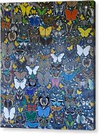 Butterflies Acrylic Print by Steven Taylor