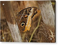 Acrylic Print featuring the photograph Butterfly 1 by Kathy Churchman