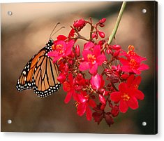 Acrylic Print featuring the photograph Butterfly 1 by Leticia Latocki