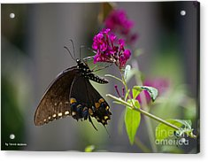 Acrylic Print featuring the photograph Butterfly 1 by Tannis  Baldwin