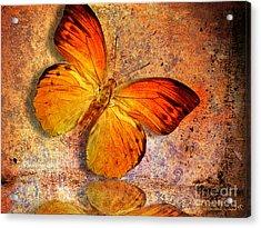 Butterfly 2 Acrylic Print by Mark Ashkenazi