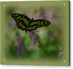 Acrylic Print featuring the photograph Butterfly 4 by Leticia Latocki