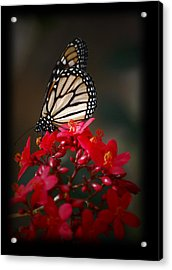 Acrylic Print featuring the photograph Butterfly 6 by Leticia Latocki