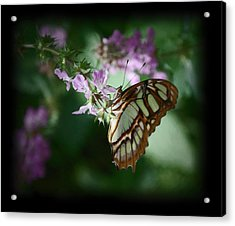 Acrylic Print featuring the photograph Butterfly 7 by Leticia Latocki