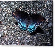 Butterfly And Asphalt Acrylic Print