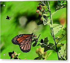 Butterfly And Bee Acrylic Print by Ron Grafe
