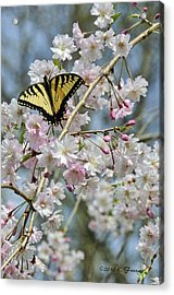 Butterfly And Blooms Acrylic Print by Kenny Francis