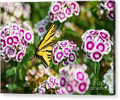 Butterfly And Blooms - Spring Flowers And Tiger Swallowtail Butterfly. Acrylic Print by Jamie Pham