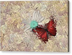 Butterfly And Daisy - S3001a Acrylic Print