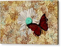 Butterfly And Daisy - S3003c Acrylic Print