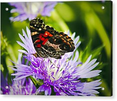 Butterfly And Flower Acrylic Print by Debra Crank