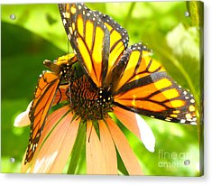 Butterfly And Friend Acrylic Print
