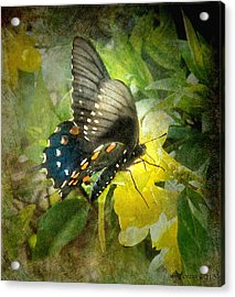 Butterfly And Jasmine Acrylic Print